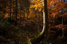 Los Bosques En Otoño Tienen U...