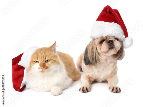 Stampa su Tela Cute cat and dog in Santa hats on white background