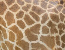 Giraffe Skin Pattern Texture B...