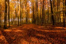 Las Aleja Jesień Drzewa Bory Park Buki Olchy światło Cień Złota Pora Roku żółty Pomarańczowy Jesienią Spacer Polska