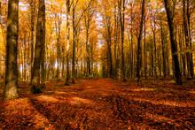 Las Droga Jesień Drzewa Bory Park Buki Olchy światło Cień Złota Pora Roku żółty Pomarańczowy Jesienią Spacer Polska