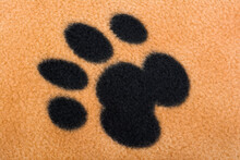 Close-up Of A Pet's Paw Print ...