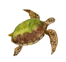 Beautiful Watercolor Turtle On...