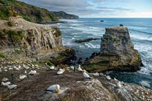 Landscape New Zealand - Muriwa...