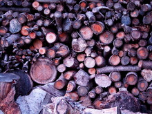 Stacked Wood Logs, Cut Tree Br...