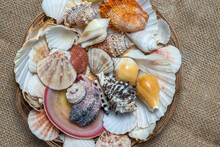 Drilled Sea Shell Mix / Set For Crafting Vase Fillers Top View