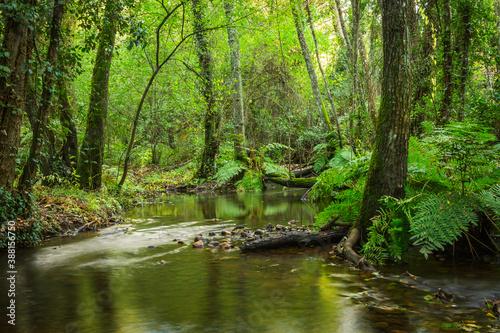 Obraz na plátně Beautiful forest with amazing green multiple vegetation