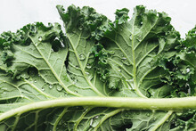 Fresh Green Kale With Water Droplets