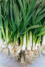Organic Green Onions With Root...