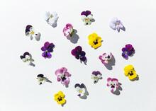 Garden Pansies On White Backgr...