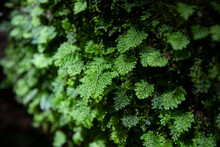 Green Fern Detail Nature In Th...