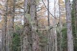 山の中にある木