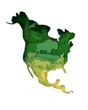 Wildlife Of North America, World Continent. Vector Illustration In Paper Art Style. Mainland North America Map With Nature, Bison, Moose Raccoon, Striped Skunk, Coyote Jaguar Wild Animals Silhouettes.