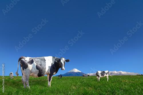 Fényképezés 青空と富士山を背景にした高原の牧場で草を食む牛数頭