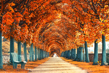 Farbenprächtige Allee Im Herbst