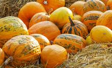 Orange Edible Pumpkins On Stra...