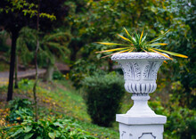 Urn With Flowerpot In Autumn Park