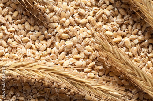 Fotografering Close up of wheat seed