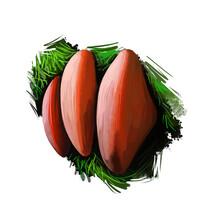 Fistulina Hepatica Beefsteak Fungus Polypore, Ox Tongue Mushroom Bracket Fungus Agaricales. Edible Fungus Isolated On White. Digital Art Illustration, Natural Food Autumn Harvest Or Fall Crop.