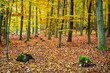canvas print picture - Autumn forest with mossy stumps and colorful leaves