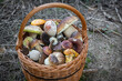 canvas print picture - Look into wicker basket with edible mushrooms in forest