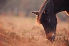 Horse Grazingin At Beautiful S...