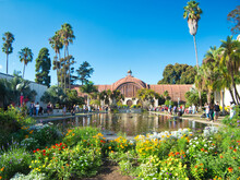 Lily Pond In Balboa Park, San Diego, California.