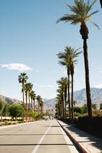 Palmtree Road In Palm Springs