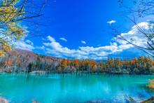 青い池と青空と紅葉
