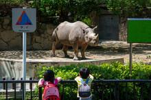 Children Visiting Rhinoceros I...