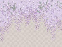 藤の花の背景_和風イラスト_藤棚