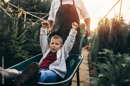 Canvas grandfather giving grandson ride in wheelbarrow in tree nursery