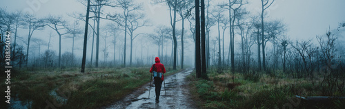 Obraz Hipster young girl with enjoying on peak of foggy mountain. Tourist traveler on nature pine forest background - fototapety do salonu