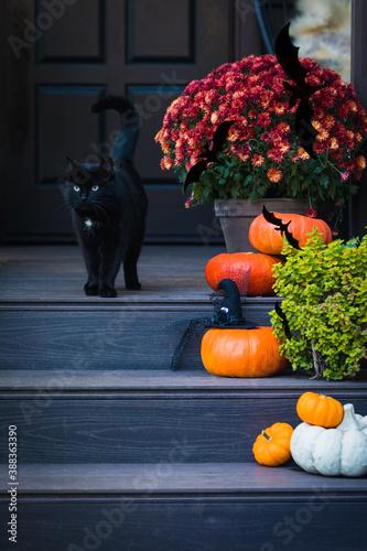 Fotografia Halloween garden composition with a black cat, orange pumpkins, chrysanthemum po