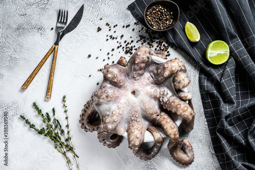 Fresh octopus ready for cooking Fototapet