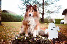 Happy Funny Halloween Postcard...