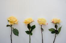 Four Yellow Roses On Plain Whi...