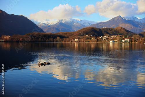 Fotografija Two ducks swim at Avigliana lake in from of scenic view of Alps mounta