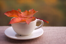 Cup With Saucer And Orange Map...