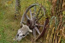 Wheel And Skull