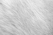 Dark White Fur Texture Or Gray...