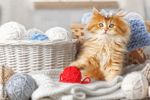 Cute kitten with a bow in a basket with balls of yarn Wallpaper Mural
