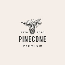 Pine Cone Hipster Vintage Logo Vector Icon Illustration