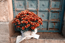 Orange And Red Color Chrysanthemums In A Flower Pot In Front Of Rusty Wall, Flowers For Rituals Or Funerals
