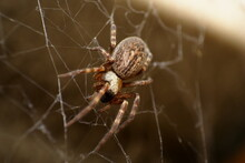 Macro Close Up Of A Common Hou...