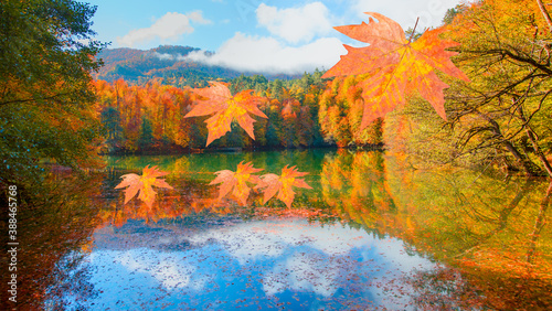 Fototapety, obrazy: Fallen red and yellow leaves in autumn forest - Autumn forest landscape reflection on the water with wooden pier - Autumn landscape in (seven lakes) Yedigoller Park Bolu, Turkey