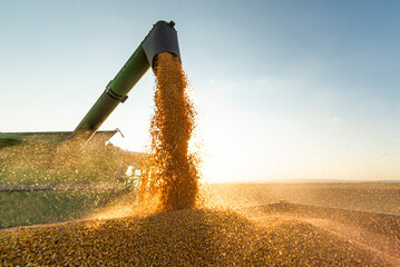 Combine transferring soybeans after harvest
