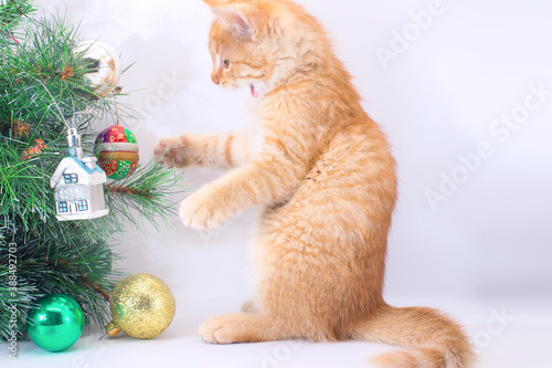 Photo A funny kitten plays with New Year's toys
