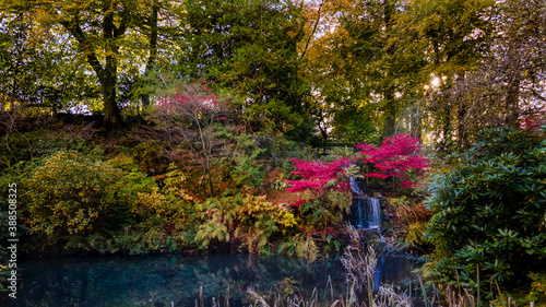 Fototapety, obrazy: pink leaves in automn along with colourful trees in the forest
