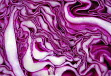 Fresh Red Cabbage Texture Background. Top View. Natural Purple Background